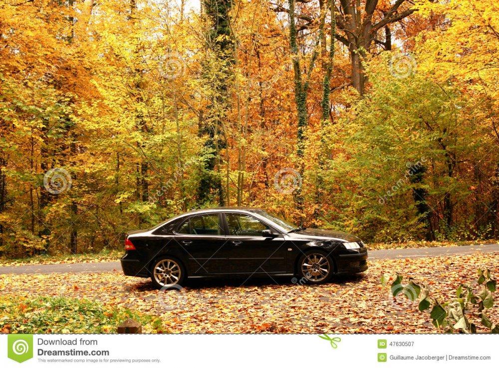 voiture-noire-dans-la-for%C3%AAt-4763050