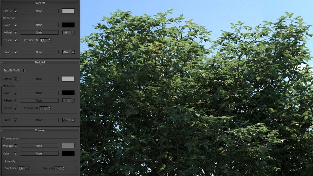 back_foliage4_srgb_intro.jpg