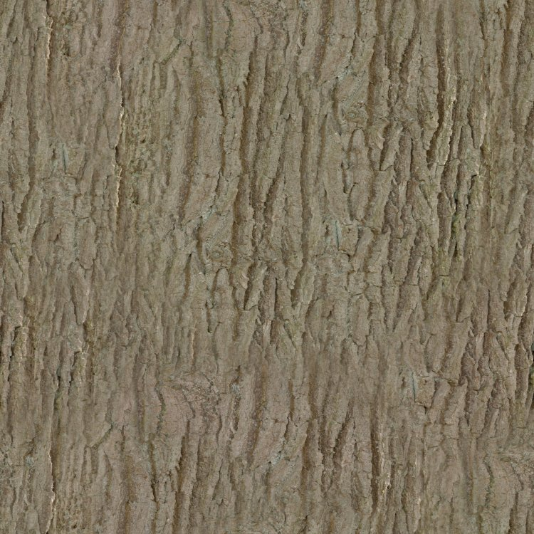 Bark002_4K_Color.jpg
